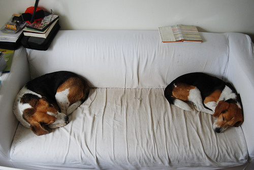 beagle book ends