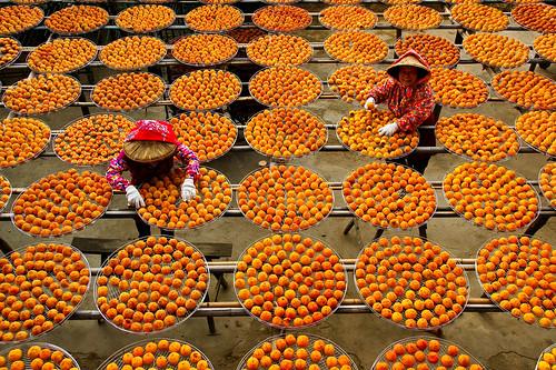 當豐收的時候想辦法保存下來,可以吃一整年