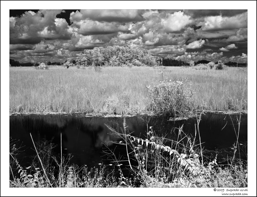 Everglades in Infrared - 4