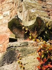 East Lothian - Cockburnspath - St Helens Church - The Sundial (pariscub) Tags: red plants church architecture scotland vines edinburgh village cove scottish east sthelens kirk lothian southernuplandway cockburnspath