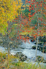 Cannich riverbank (Chris Sharratt) Tags: scotland highlands birch rowan naturesfinest scotspine glencannich rivercannich