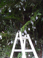 YOKO ONO WISH TREE ASUNCION (PARAGUAY) FOR LGBT HUMAN RIGHTS (Jorge Artajo Muruzabal) Tags: paraguay yokoono asuncin wishtree jorgeartajo historiasdeamor coleccinvisible