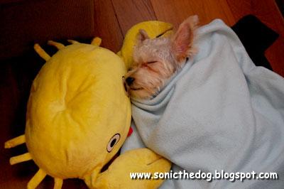 Sleepy Sonic 2