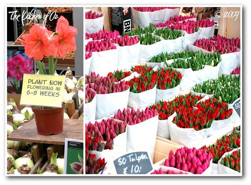 Tulip Heaven