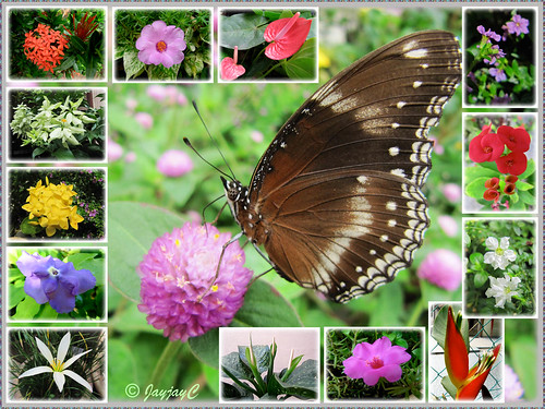Collage of colourful flowers and butterfly captured in our tropical garden, November 2009