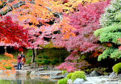Colors of Autumn, Tokyo Japan (_takau99) Tags: takau99 travel trip vacation holiday panasonic lumix dmcfx30 2009 november maple mapleleaf leaf koyo redleaf red autumn fall    asia japan japanese  tokyo koishikawa korakuen koishikawakorakuen garden gardens iidabashi      topf10 hmm topv111 topv555 topv999 topv1111 autumnleaves     topv2222