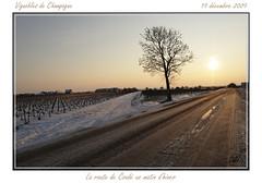 La route de Cond un matin d'hiver (alboms) Tags: winter snow vineyard champagne hiver neige vignoble vigne leverdesoleil bouzy montagnedereims