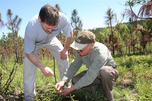 NRCS Soil Conservationist Lane Kimbrough and landowner Orby Wright examine the growth of legumes in a longleaf pine forest.