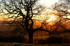Plains (music_man800) Tags: hadleigh castle country park countryside outdoors nature view london plains railway southend essex uk united kingdom light backlight backlit silhouette shapes sunset evening sun bright natural dusk afternoon winter january tree canon 700d gimp2 edit photography creative branches landscape