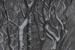 Snow Day #15 (Keith Michael NYC (2 Million+ Views)) Tags: centralpark manhattan newyorkcity newyork ny nyc