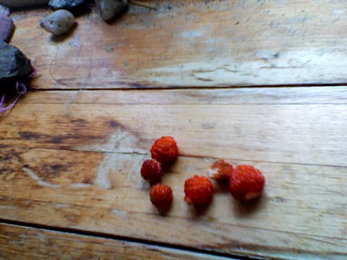 the tiniest strawberries