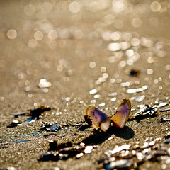The butterfly effect (irene gr) Tags: light sunset square gold sand heart bokeh shell olympus 11 zuiko e30 43 fourthirds 1454mm f2835 zuikodigital 1454mmii irenegr