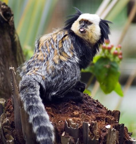 Tropical Rainforest Animals Names