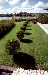 Jardim (Shigow) Tags: brazil nikon mine fuji victor sp 100 fm3a reala shigueru ituverava shigow