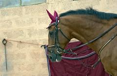 Horly the best (Piero Gentili) Tags: box stalla cavallo animale sella stallone monta ragazza fattoria gentili maneggio galoppo trotto criniera equitazione animaledomestico amazzone puledro cavalcare parastinchi piero20051 pierogentili gentilipiero pierpaologentili andareacavallo bandanacavallostalloneequitazionepuledrocrinieraanimaledomesticofattoriamaneggiostallaboxcavalcareandareacavallomontaragazzaacavalloamazzonegaloppotrottosellaparastinchi ragazzaacavallo