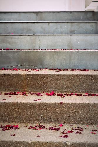 Fallen Flowers:  July 5, 2009