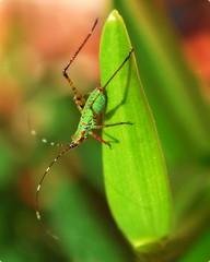 how to come into grasshopper pose
