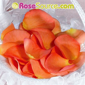 Orange Flower Girl Rose Petals