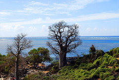 Cookout under Baobab - North of Moroni Airport, comores