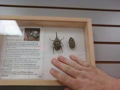 0805091513a (aortali1375) Tags: bugmuseum