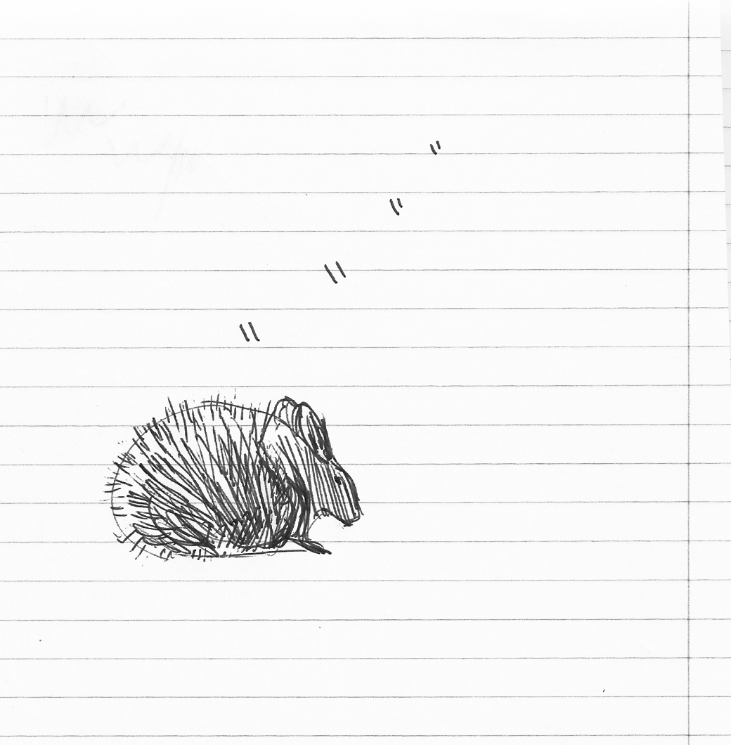 zoo drawing1
