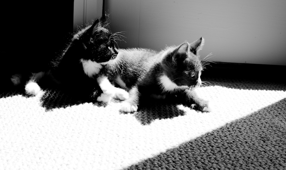 Sunbeam Kitties