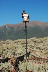 bird feeder at Twin Lakes, Colorado (carmacke~) Tags: mountains colorado birdfeeder twinlakes