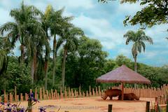 IMG_7953 (dantasdesign) Tags: brazil brasil sãopaulo zoológico paulo são cidades sopaulo zoolgico