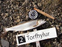 Torfhylur gaf mest (Dr hoddsson) Tags: nature iceland fishing flyfishing trout fishingfly articchar víðidalsá