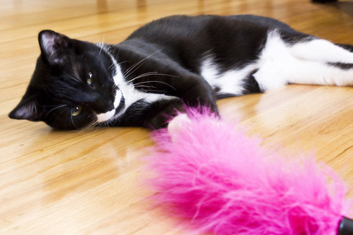 jenkins and pink feather 01