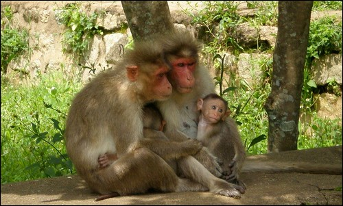 Cute Monkey Family