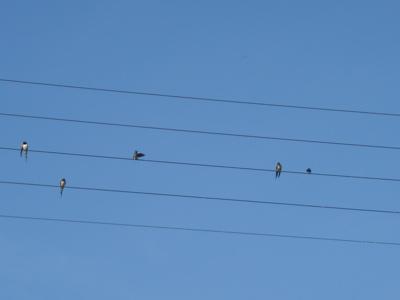 birdmusic2