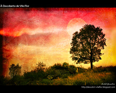 Esperando... (Transmontano) Tags: portugal award arvores legacy texturas textured bragana braganca vilaflor imagepoetry xoox specialtouch transmontano ilustrarportugal srieouro spiritofphotography absolutelystunningscapes awardtree colorsofthesoul doubledragonawards artofimages artistictreasurechest themonalisasmile bestcapturesaoi soulaward sailsevenseas addvf iniciaticaward portugalmagico