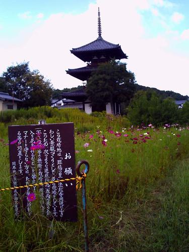 法起寺とコスモス@トイカメラ-01