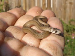 Tiny Snake (In The Sun)