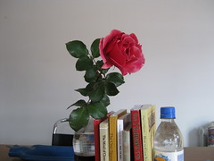 week two_red rose