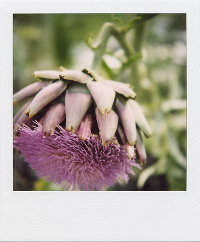 Nodding Artichoke by optically active.
