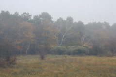(hadewijch) Tags: plants tree nature netherlands weather fog landscape scenery land noordholland nikond90 1750mmf28 noordhollandsduinreservaat