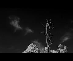 Untitled (Chee Seong) Tags: sky bw tree clouds canon ir malaysia selangor kotadamansara canon1740mm 400d