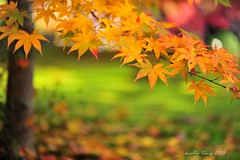 getting red (Jennifer ) Tags: autumn red green fall nature colors yellow japan zeiss temple kyoto carl     carlzeiss zf oohara  nikond700   distagont2821   zeisscontest2010