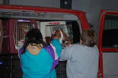 Home For Howlidays Rescue - 14