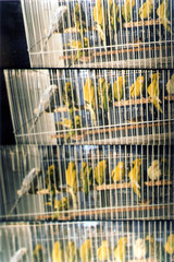 I Believe I can Fly (Orangeya) Tags: camera film birds one photo scanner edited scanned wagif soug not 4in1camera