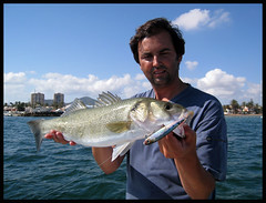 SL 9 (Gorrioni) Tags: fishing shoreline lures spinning rod sammy pescado pesca robalo daiwa paseante lubina llampuga labrax lightspinning luckycraft seuelos zclaw gunfish gunnish