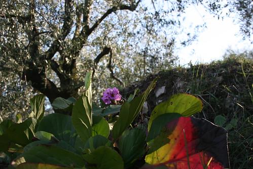 olivier fleurs