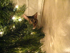 Maggie helping decorate the tree