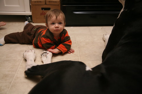 Henry with the dogs