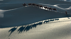 2378 Camel train--The Silk Road , China (ngchongkin) Tags: shadow niceshot peace desert photos camel harmony 1001nights fhm shiningstar ohhh nationalgeographic eticket polaris musictomyeyes fotoclub welcometoparadise goldheart sailthesevenseas beautifulshot thesilkroad flickrsbest superphotographer flickrstars allthatglitters kartpostal goldenmix royalgroup diamondheart platinumphoto peaceaward flickrhearts richardsgroup flickraward flickrbronzeaward heartawards diamondstars flickrsun magiclandscape platinumheartawards betterthangood dazzlingshots flickridol thebestofday gnneniyisi thebestshot spiritofphotography gnneniyisithebestofday discoveryphotos 469photographer flickrestellas artofimages fabbow contactaward ablackrose thekeyofyourmind platinumbestshot doublyniceshot richardssilverstar selectbestexcellence totaltalent sbfmasterpiece flickrsgottalent flickrssuperstartalent bestpeopleschoice unicornawards eliteflickridol mygearandme mygearandmepremium fabulousplanetevo goldstarawardlevel1 geniesnaturegallery blinkagain flickrbronzetrophy regentsaward
