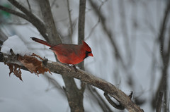 Winter tweets (by Christopher S. Penn)