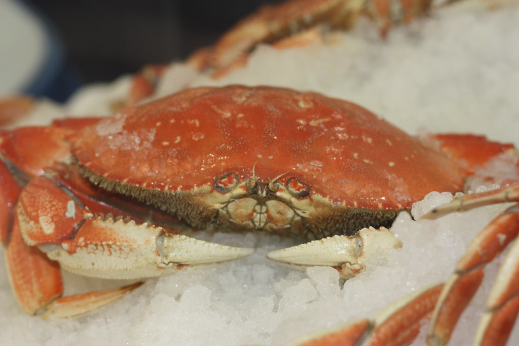 The World's Best Photos of crab and frozen - Flickr Hive Mind