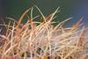 Mai (pixel-rausch) Tags: cactus grandcanyon calendarshot
